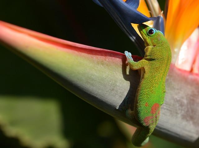 gecko dans le parc tropical en Allemagne