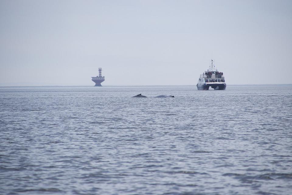 observation de Baleine