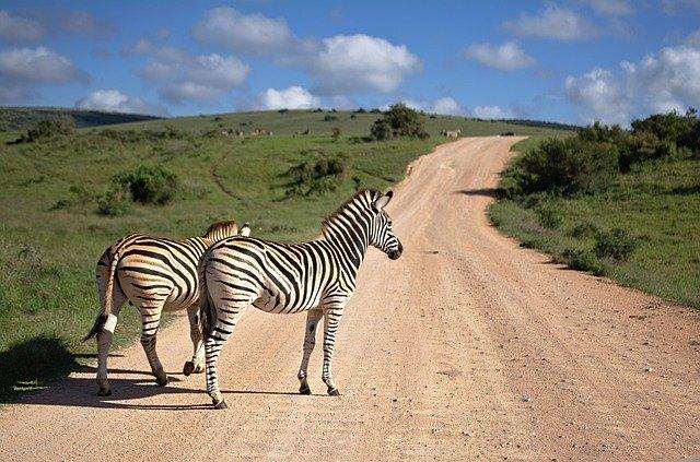 animaux sauvage en afrique du sud