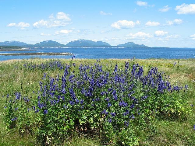 Le parc national d'Acadia