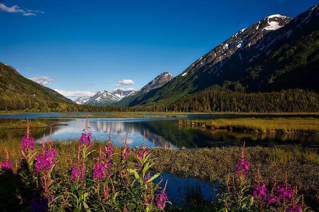 Foret et paysage d'Alaska