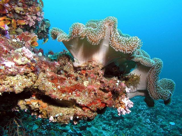 Coraux aux Maldives