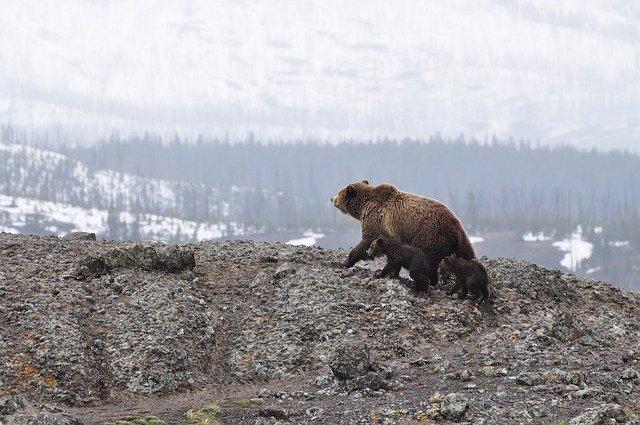 ours en alaska