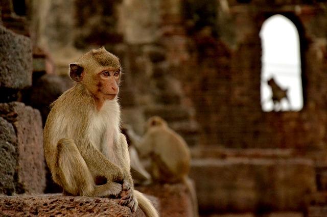singe thailande